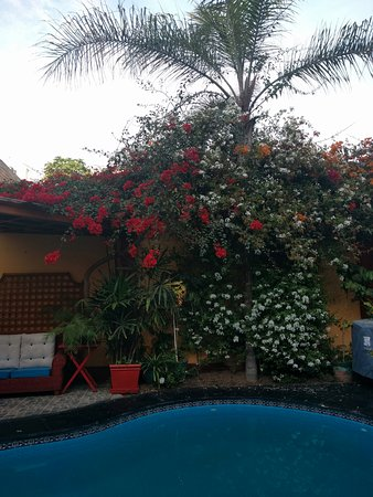 Peru Star Botique Apartments Hotel: Plants by the pool