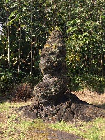 """Pahoa, HI: """"Monkey"""" lava tree"""