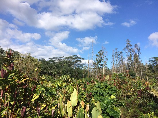 Pahoa, HI: Additional view of the park