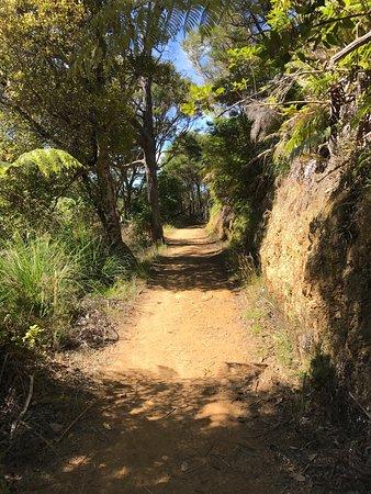 Queen Charlotte Track: photo1.jpg