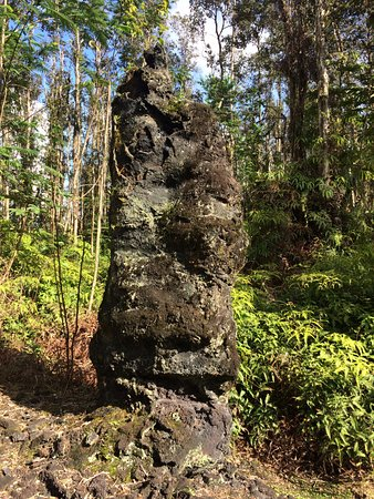 Lava Tree State Park: Move lava trees