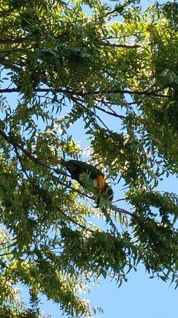 Campbelltown, Australien: Birds above us at lunch