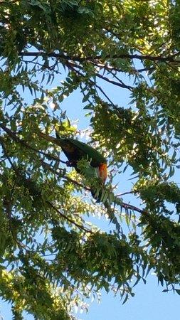 Campbelltown, Australien: Colourful birds