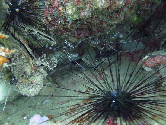 Namloo Divers - Day Diving : photo0.jpg