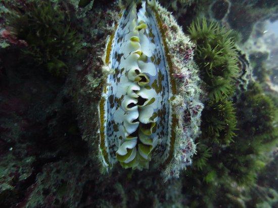 Namloo Divers - Day Diving : photo1.jpg