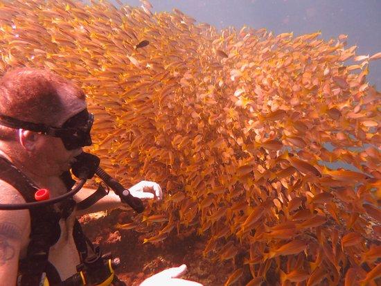 Namloo Divers - Day Diving : photo4.jpg