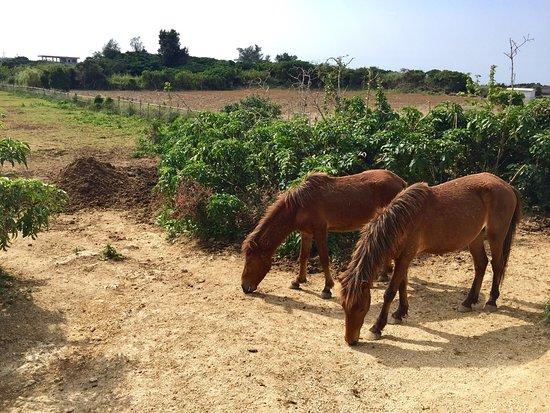 Nikadori Farm