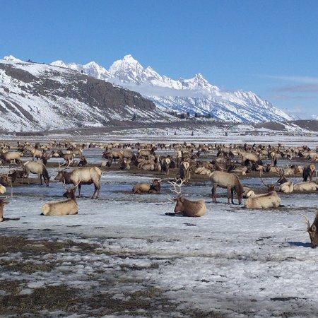 National Elk Refuge: IMG_20170311_131724_916_large.jpg