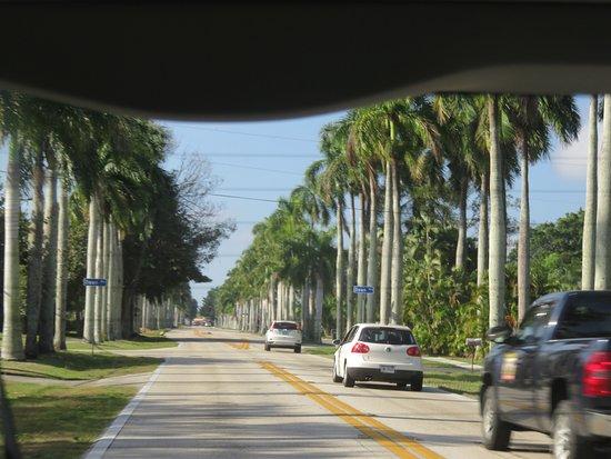 McGregor Boulevard: Lovely Street