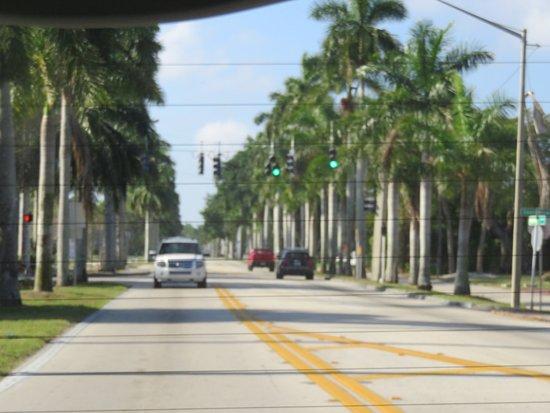 McGregor Boulevard: City of Palms