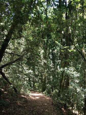 Parque Nacional La Tigra照片