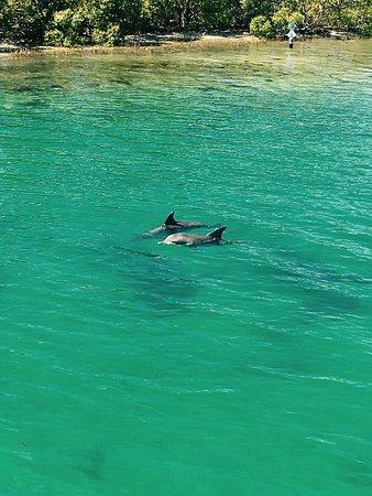 Amaroo Dolphin and Whale Watching Cruises: photo1.jpg