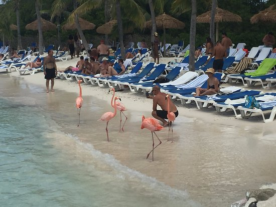 Renaissance Aruba Resort The Flamingo Beach On Private Island