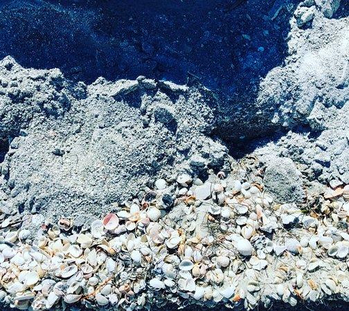Egmont Key Boat Tour: Shells on the beach