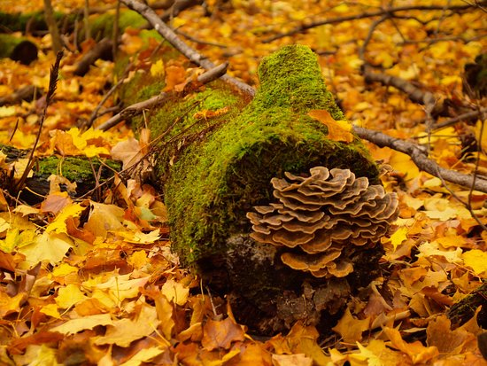 Bois-de-Liesse Nature Park