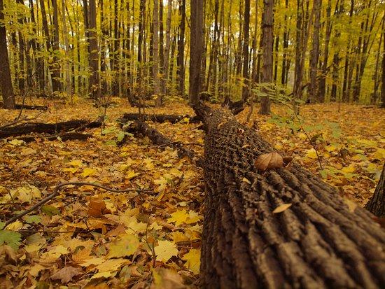 Bois De Liesse Nature Park Montreal