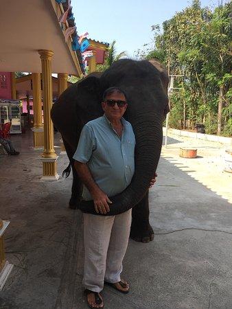 Hutsadin Elephant Foundation: photo1.jpg