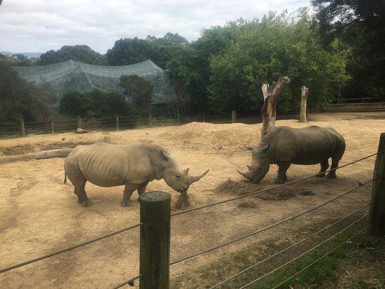Hamilton Zoo: Rhinos!!!