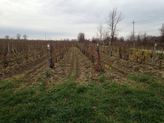 Conneaut, Οχάιο: Vineyard