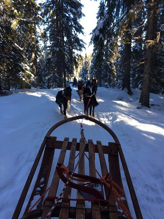 Undersaker, Szwecja: Dog sledding in the Swedish woods