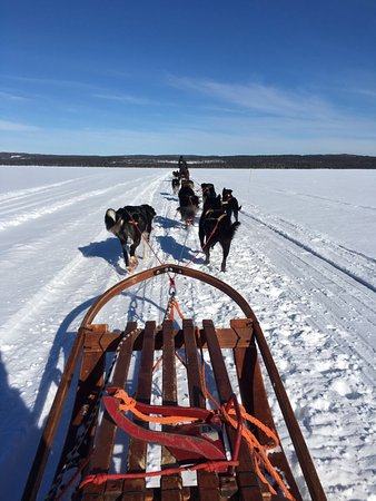 Undersaker, Szwecja: Dog Sledding across the frozen lake