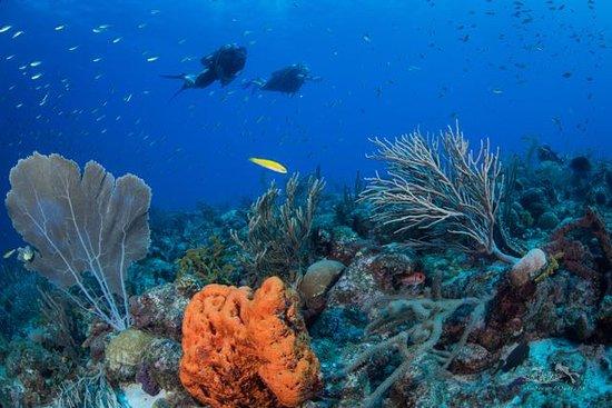 Eco Dive Barbados: Das Bild wurde, während unseren Tauchgang, von Andrew Western aufgenommen.