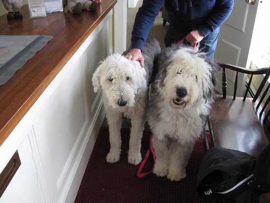 Sugar Hill, NH: Dudley (left) the Asst Mgr offered Huckleberry fine example of Old English gentlemen's behavior.