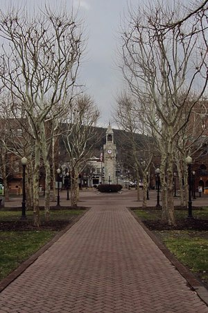 Corning, NY: Interesting trees
