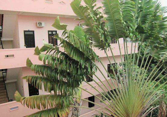 Travelers Palm - Lan Anh Hotel