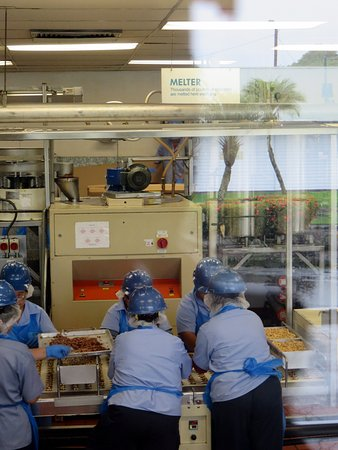 "Keaau, HI: another view of the conveyor belt personnel, ""Lucy, where are you?"""