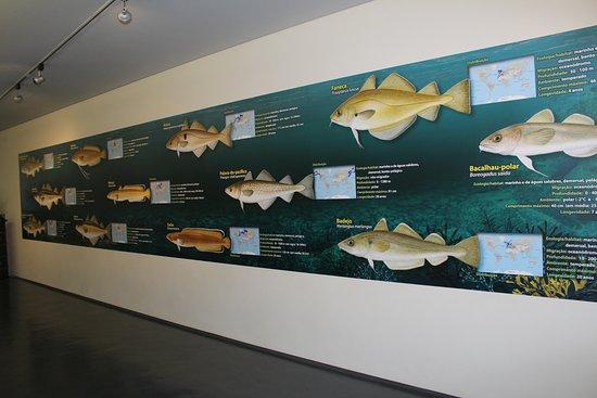 Corredor de acesso ao aquário de bacalhau. Foto: Museu Marítimo de Ílhavo.