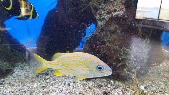 Punta Culebra Nature Center: 20170312_104210_large.jpg