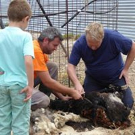 Maroulas, Grecja: Taking care our sheeps with our friends!!
