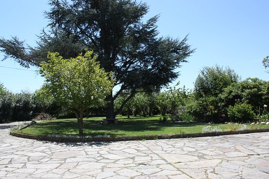 Conques-sur-Orbiel, França: large front garden with assorted fruit trees and the stunning blue spruce. large drive