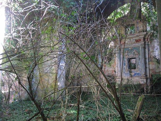 Valentano, Италия: interno con alberi e pavimento coperto dall'edera