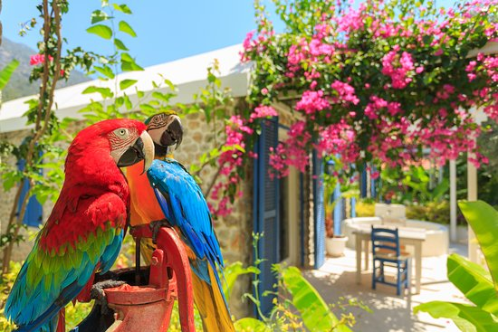Flamingo Hotel Photo