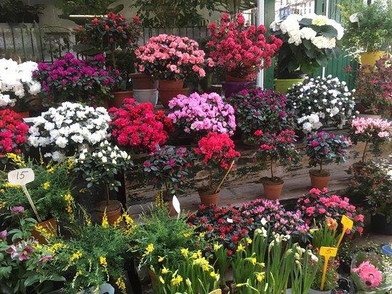Marché aux fleurs - Ile de la Cité