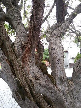 Templo de Confucio en Taipéi: Esquilos