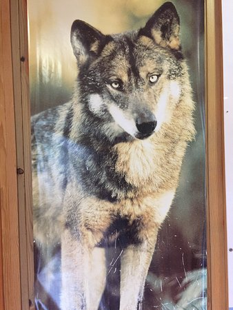 Iberian Wolf Recovery Centre: photo4.jpg
