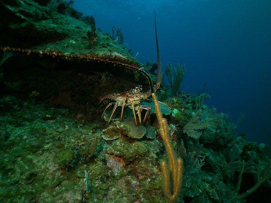 Valentine's Dive Center: photo3.jpg