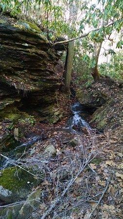 Pineville, KY: Fern Garden trail?