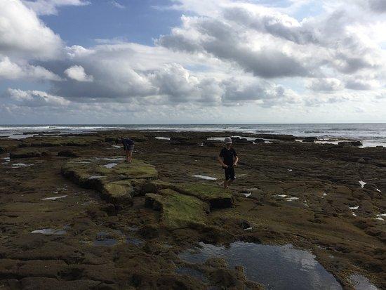 Pekutatan, Indonesia: Tide pools are amazing at low tide