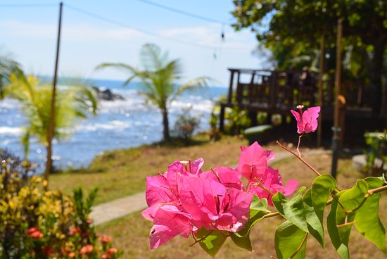 Costa Paraiso: the garden that borders the ocean