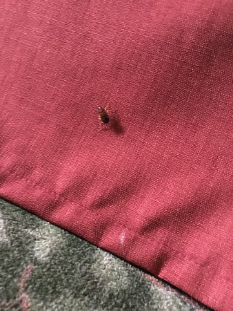 Ridgeland, MS: This was sitting on the bed skirt