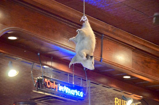Booger Red's Saloon: possum hangs from ceiling