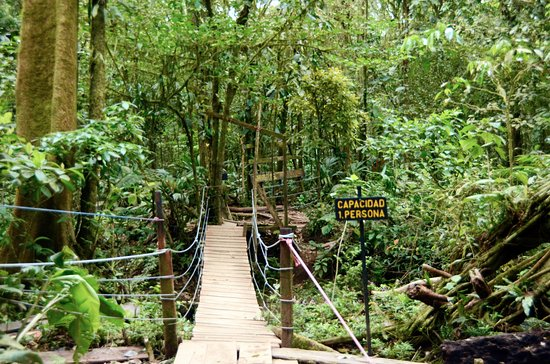 Tenorio Volcano National Park, Costa Rica: One of several bridges to cross