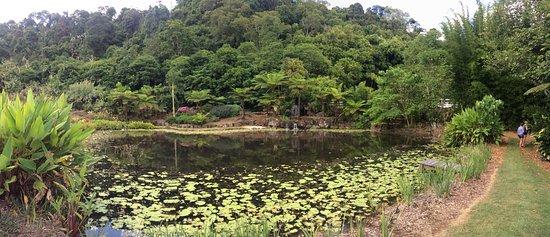 Maleny, Australië: One of the many gardens