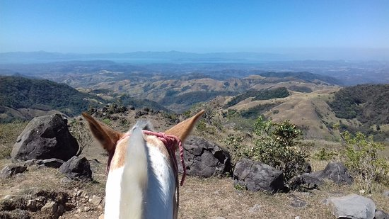Sabine's Smiling Horses : My travel companion, so quiet and noble ;)