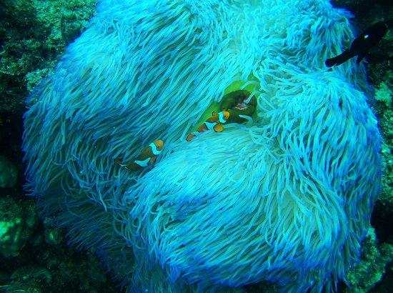 Ocean Free and Ocean Freedom: photo1.jpg