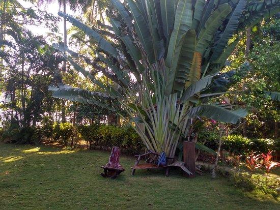 DabDab Resort : Сад